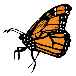 monarch butterfly from folioglyphs